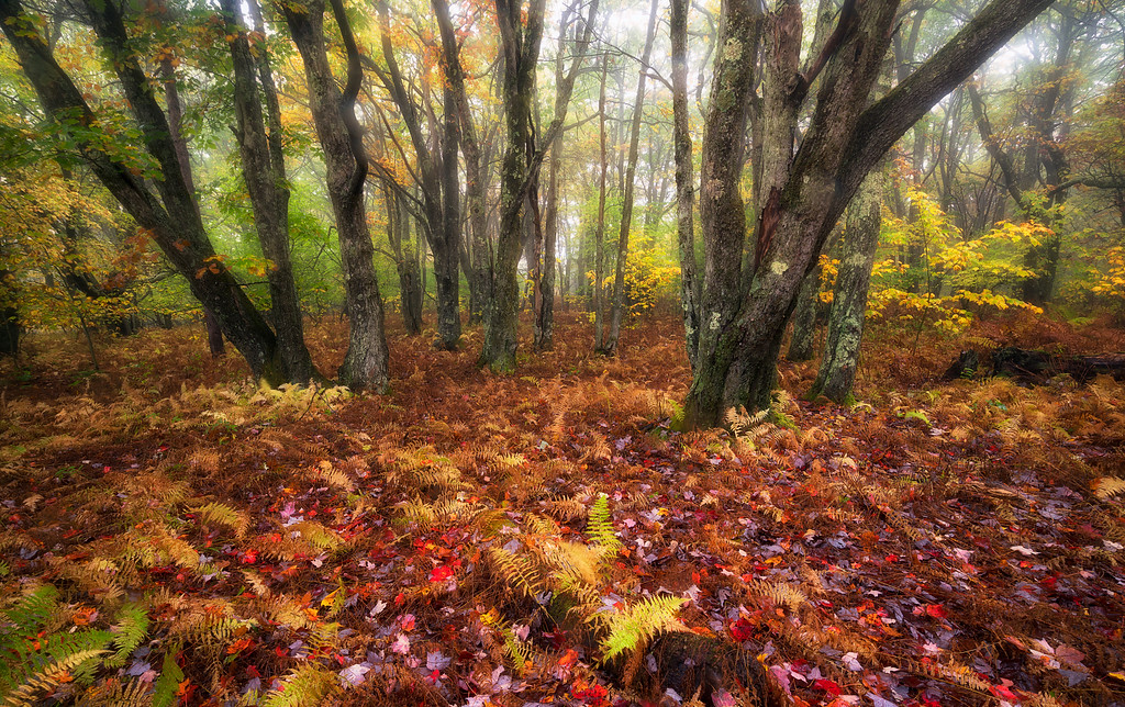 Enchantment of Fall