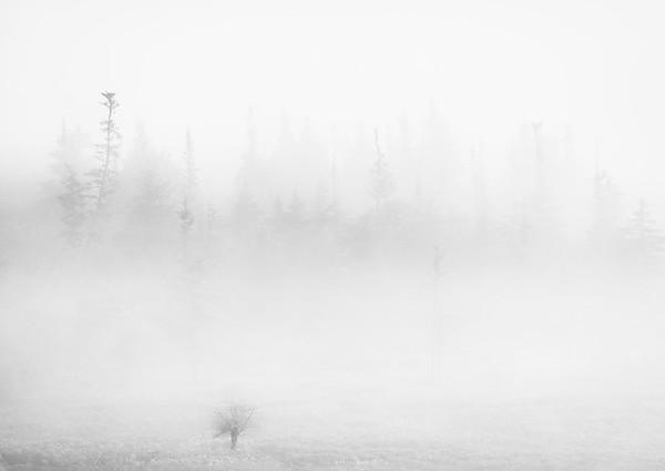 Morning Fog, Canaan Valley West Virginia