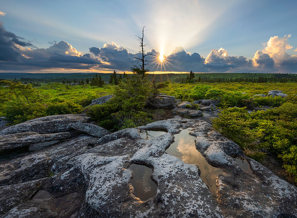 Rays, Dolly Sods Wilderness