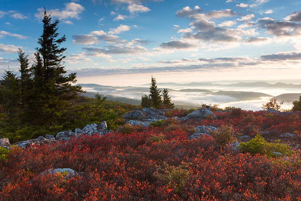 Fall in Dolly Sods