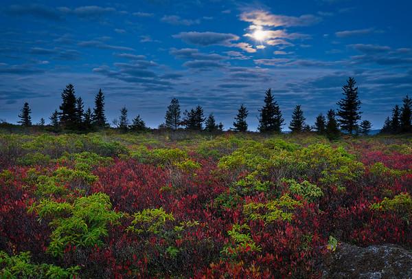 Fall Sods Moonset