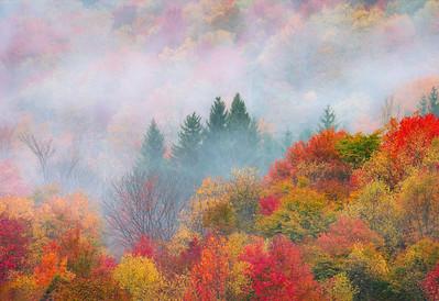Fall, Fog, and Spruce
