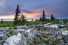 Sods Mountain Laurel Bloom