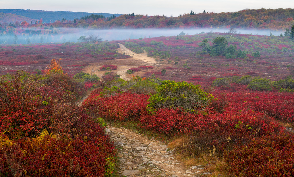 Fall Ground Fog