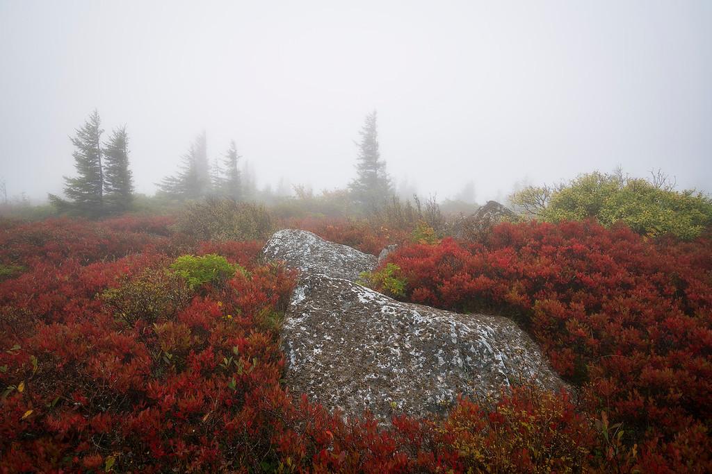 Sods Fall and Fog