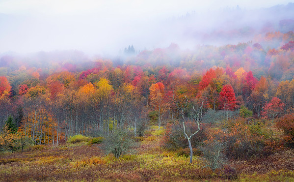 Canaan Valley, Fall 2020