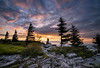 Dolly Sods Daybreak