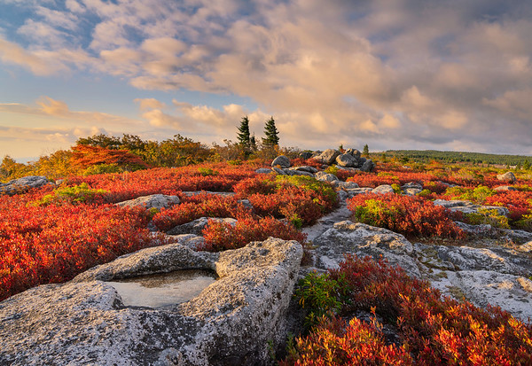 Early Fall Morning, Dolly Sods Wilderness