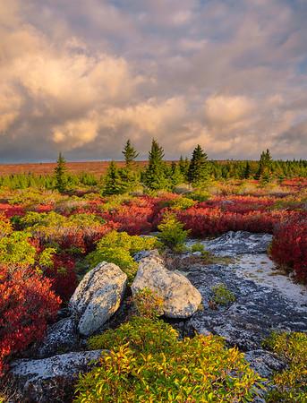 Fall Morning Light, Dolly Sods Wilderness Area