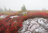 Vibarant Fog and Thick Colors