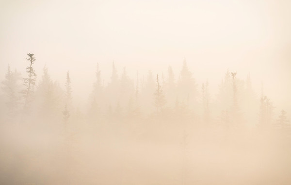 Foggy Sunrise, Canaan Valley, WV