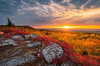 Fall Sunrise, Dolly Sods Wilderness Area