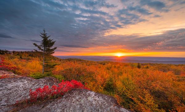 Sunrise, Dolly Sods Wilderness