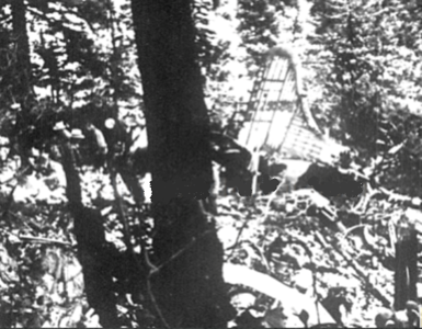 At the time of the accident the vegetation on the east side of Mount Eldon consisted of dense brush and tall pine trees. The plane broke up in the trees before it struck the mountain side.