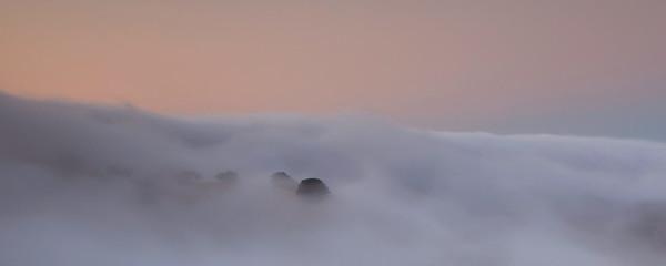 Island oaks in fog