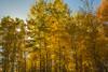Teton Aspen_N5A5384-Edit