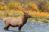 Elk_9-26-5