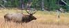 Elk_9-26-8