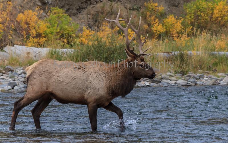 Elk_9-26-3