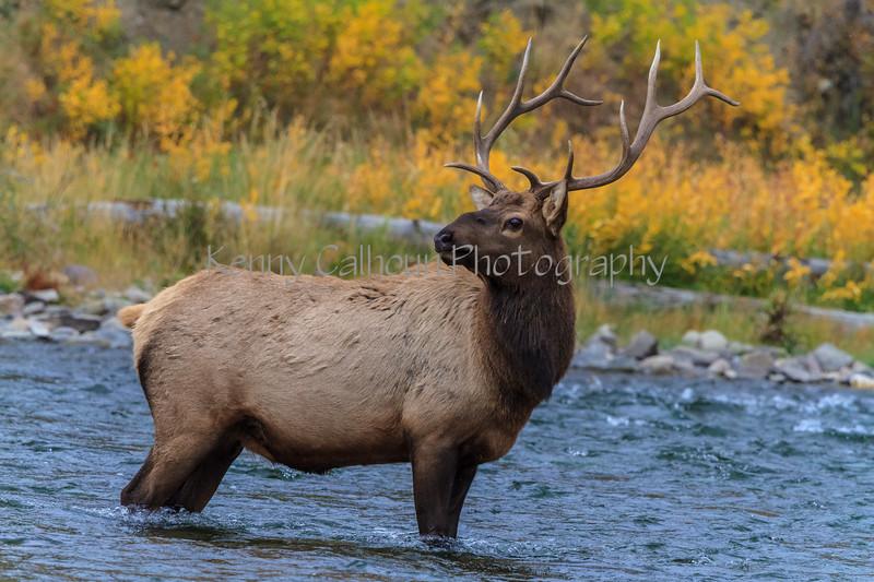 Elk_9-26-4