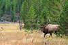 Elk_9-26-14