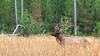 Elk_9-26-16