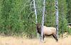 Elk_9-26-19