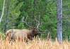 Elk_9-26-7