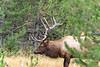 Elk_9-26-10