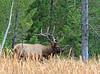 Elk_9-26-6