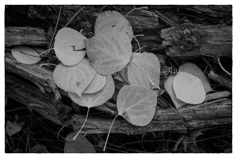Fall_Colors-5