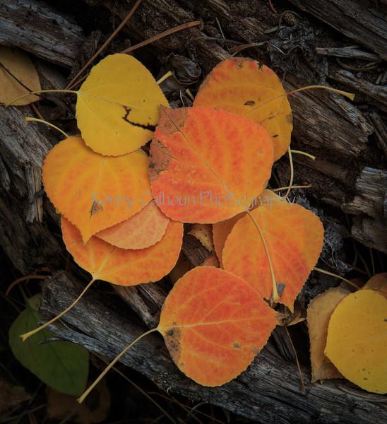 Fall_Colors-4