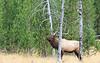 Elk_9-26-18