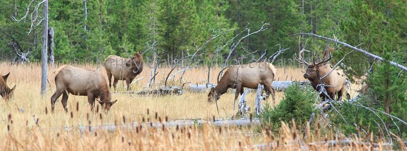 Elk_9-26-20