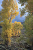 Fall Colors Lamar Valley _N5A5521-Edit-Edit