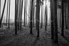 Moose Creek_N5A7206-Edit-Edit