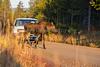 Island Park Moose Family_N5A8557