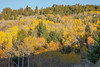 Hebgen Lake Fall Colors_N5A5089-2