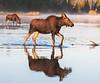 Island Park Moose Family_N5A8466-Edit