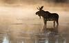 Island Park Moose Family_N5A9070