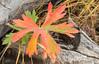 Fall Colors_N5A6241