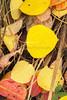 Fall Colors_N5A6263-Edit