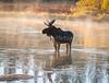 Island Park Moose Family_N5A8840-Edit