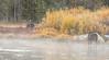 Island Park Moose Family_N5A8202-Edit
