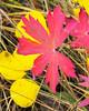Fall Colors_N5A6234-Edit