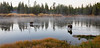 Island Park Moose Family_N5A8080-Edit-Edit