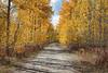 West Yellowstone Cemetery_N5A5533-Edit