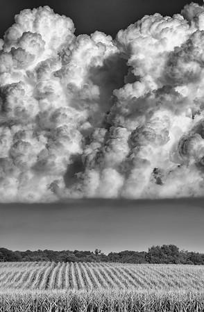 Thunderhead Cornfield