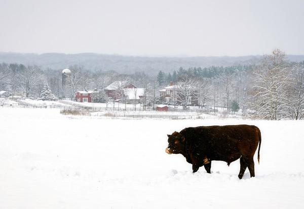 Winter at Rocklands Farm