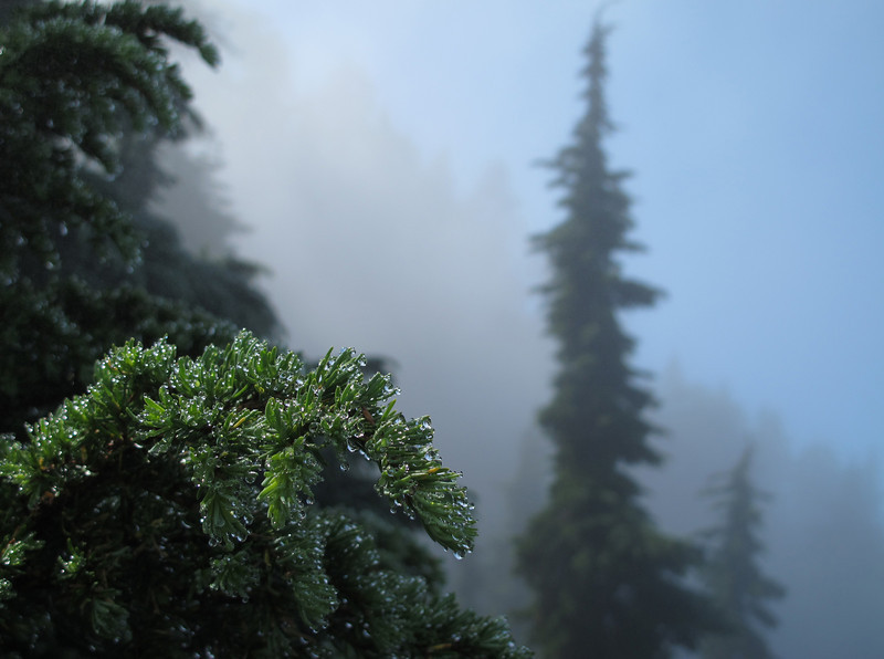 Dew on trees (entering the clouds on the way back).